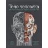 Тело человека. Интерактивная книга-панорама. Ричард Уолкер