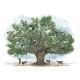 Вокруг света за 80 деревьев. Джонатан Дрори