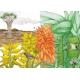 Вокруг света за 80 растений. Джонатан Дрори. Люсиль Клер